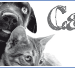 Anzeigengestaltung Tierfutter-Versandhandel