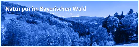 Anzeigengestaltung-bayerischen-wald