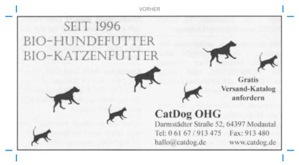 catdog_anzeige_alt